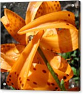 Lily Flower Art Prints Tiger Lilies Giclee Baslee Troutman Acrylic Print