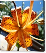 Lily Flower Artwork Orange Lilies 3 Giclee Art Prints Baslee Troutman Acrylic Print