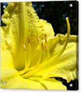 Lily Flower Artwork Yellow Lilies 1 Giclee Art Prints Baslee Troutman Acrylic Print