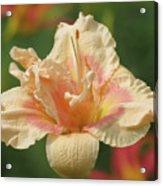 Lily Flower - Daylily Acrylic Print