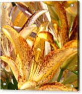 Lily Flower Garden Art Prints Canvas Floral Lilies Baslee Troutman Acrylic Print