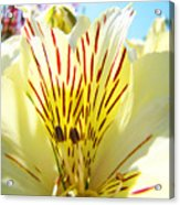 Lily Flowers Art Prints Yellow Lillies 2 Giclee Prints Baslee Troutman Acrylic Print