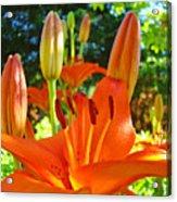 Lily Flowers Garden Art Prints Orange Lilies Floral Baslee Troutman Acrylic Print