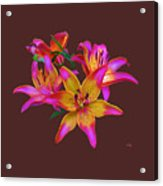 Lily Flowers Pink Maroon Acrylic Print