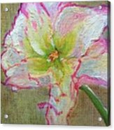 Lily From Paradise Acrylic Print