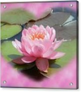 Lily Hearted Acrylic Print