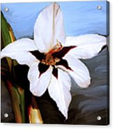 Lily I Acrylic Print