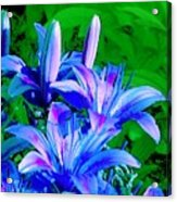 Lily In Green Acrylic Print