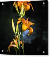 Lily In Monets Garden Acrylic Print