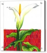 Lily In The Environment Acrylic Print