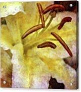 Lily In The Rain 1799 Idp_2 Acrylic Print