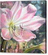 Lily Acrylic Print