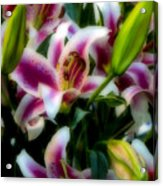 Lily Of The Field Acrylic Print