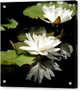Lily Of The Lake Watercolor Acrylic Print