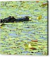 Lily Pad Gator Acrylic Print