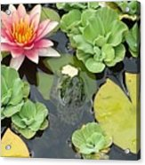 Lily Pad Lunch Acrylic Print