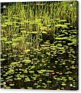 Lily Pad Place Acrylic Print