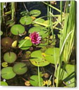Lily Pad Pond In High Noon Sun Acrylic Print