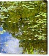 Lily Pad Pond Acrylic Print