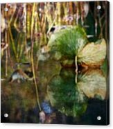 Lily Pad Reflection Oil Acrylic Print