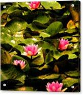 Lily Pads Above Sunken Treasure Acrylic Print