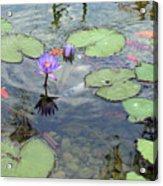 Lily Pads And Koi 1 Acrylic Print