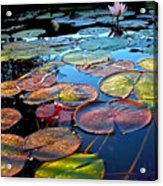 Lily Pads At Sunset Acrylic Print