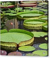 The Lily Pond Acrylic Print
