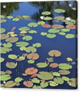 Lily Pads On Blue Pond Acrylic Print