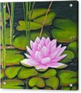 Lily Pond And Pink Acrylic Print