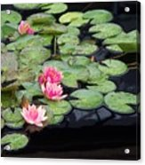 Lily Pond Monet Acrylic Print