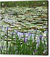Lily Pond Panorama Acrylic Print