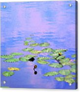 Laying Low Like A Lily Pond  Acrylic Print