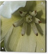 Lily Poster Acrylic Print