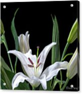 A White Oriental Lily Surrounded Acrylic Print