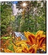 Lily Trail Acrylic Print