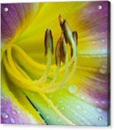 Lily Universe Acrylic Print