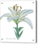 Lily Watercolor Acrylic Print