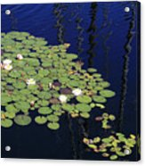 Lily Worlds One Acrylic Print