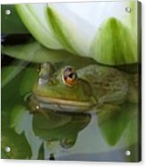 Lilyfrog - Frog With Water Lily Acrylic Print