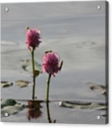 Lilypads And Wasps Acrylic Print