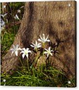 Lily's Atamasco Acrylic Print
