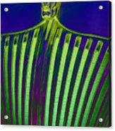 Lime Drop Acrylic Print