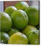 Limes Acrylic Print