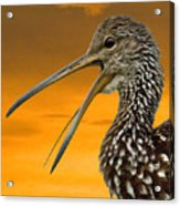 Limpkin At Sunset Acrylic Print