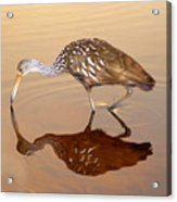 Limpkin In The Mirror Acrylic Print