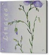Linacea Acrylic Print