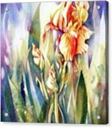 Linda's Iris Acrylic Print