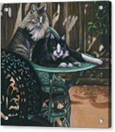 Linda's Patio Cats Acrylic Print