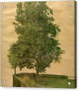 Linden Tree On A Bastion 1494 Acrylic Print